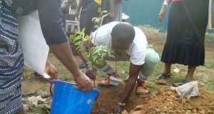 NYSC Member Godshield Kanjal flagged off over  economic tree planting exercise
