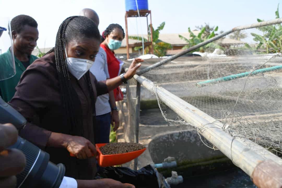 Ikorodu Fish Farm Estate